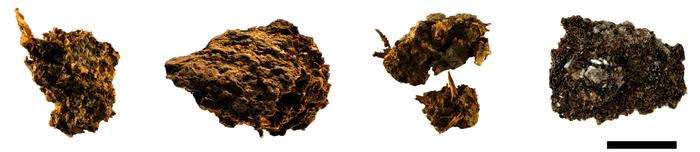 Paleofeces samples