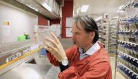 Professor Peter Currie in the Monash University Zebrafish Facility