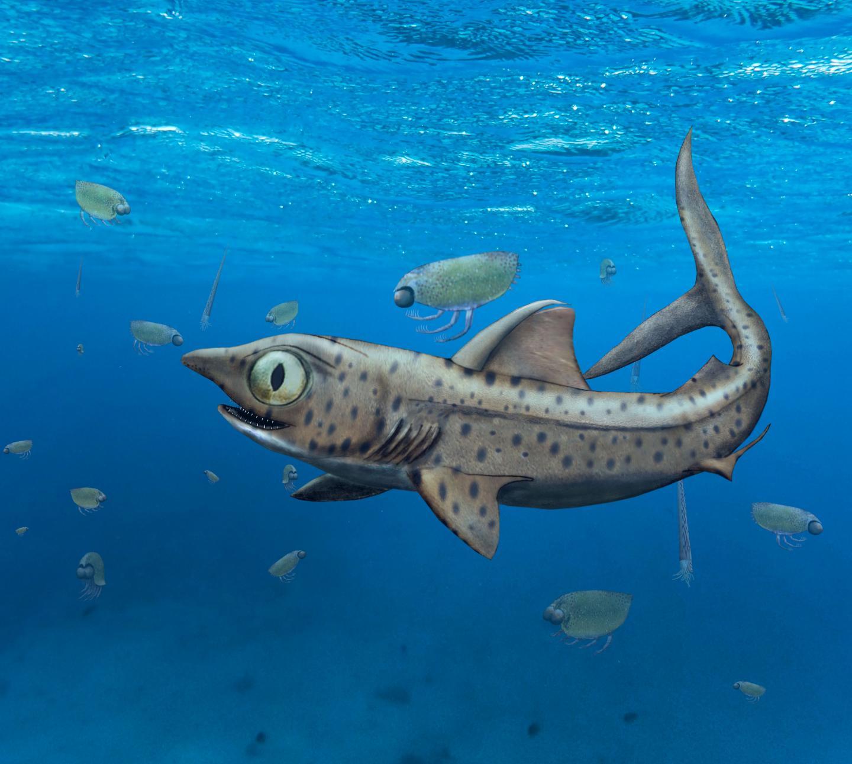 Illustration of a prehistoric shark