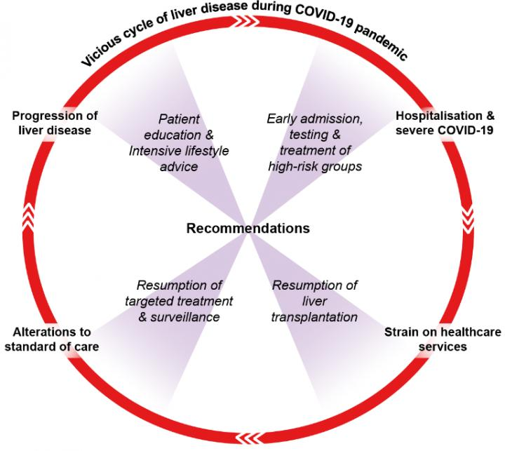 Vicious Cycle of Liver Disease during COVID-19 Pandemic