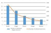 Number of Specimens Collected against the Number of Individuals (Illegal Collectors)