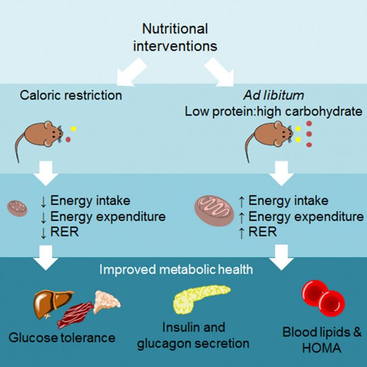 Nutritional Interventions Improve Metabolic Health in Mice