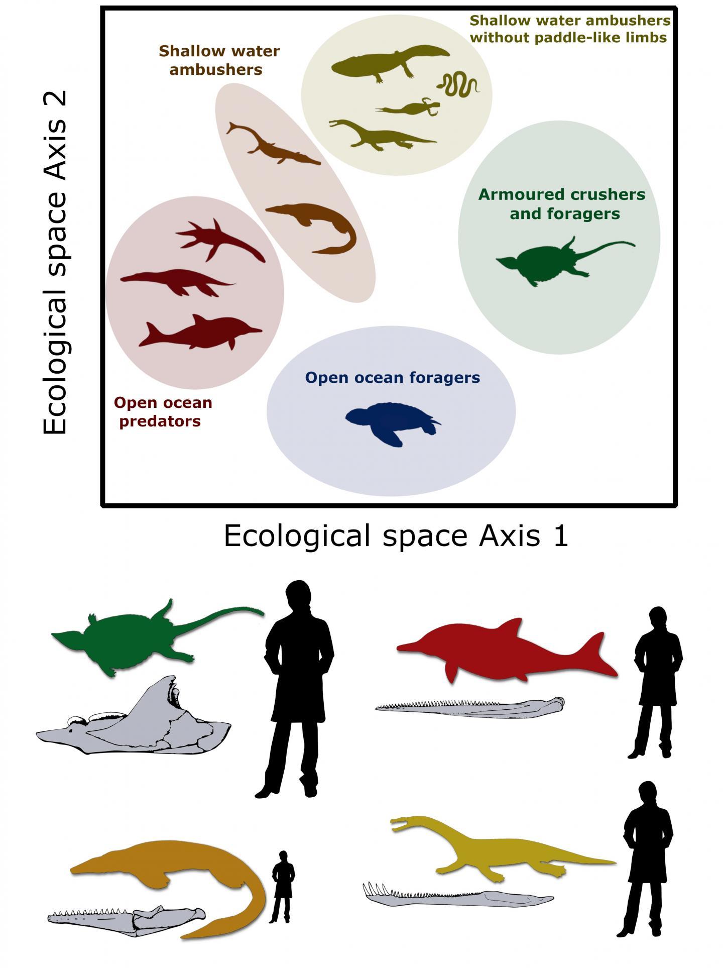 Mesozoic marine tetrapod ecospace