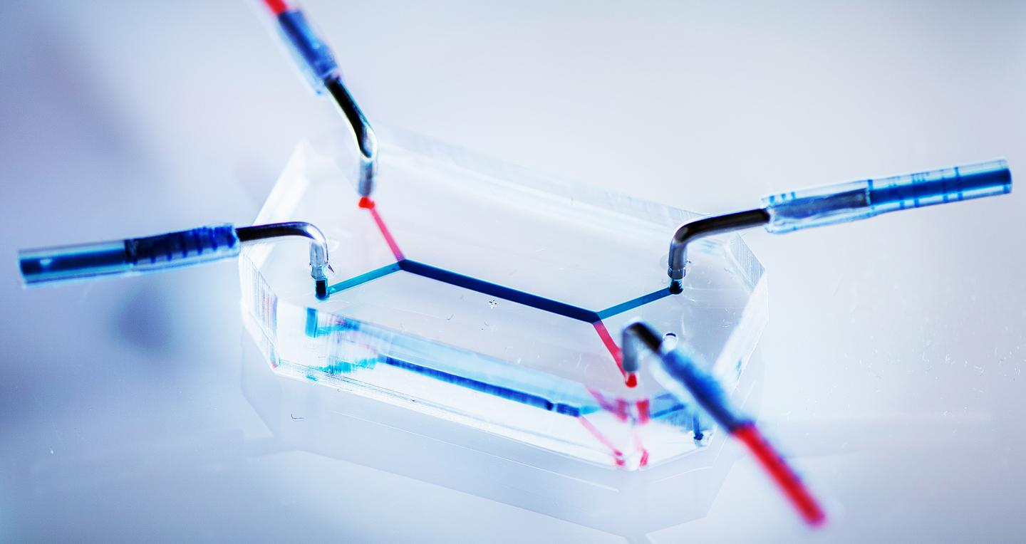Huh Lab Placenta-on-a-Chip