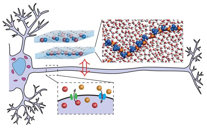Artificial neuron prototype