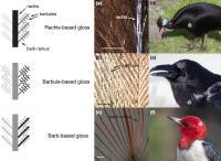 Bird Feather Comparison