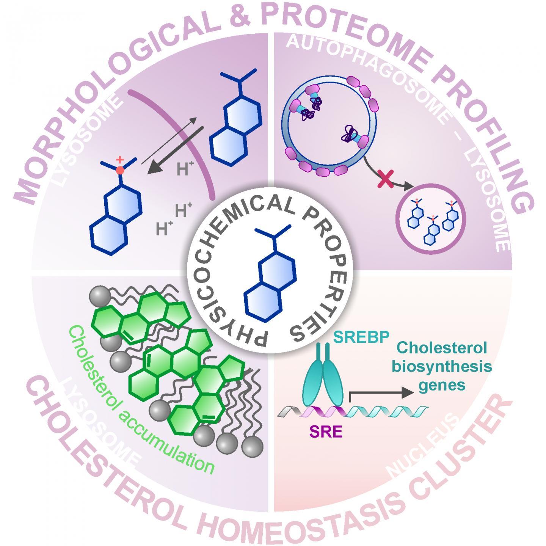 Morphological & Proteome Profiling