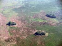 Forest Islands Seen from Above