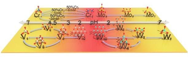 The brief evolution diagram of metal speciation transformation.