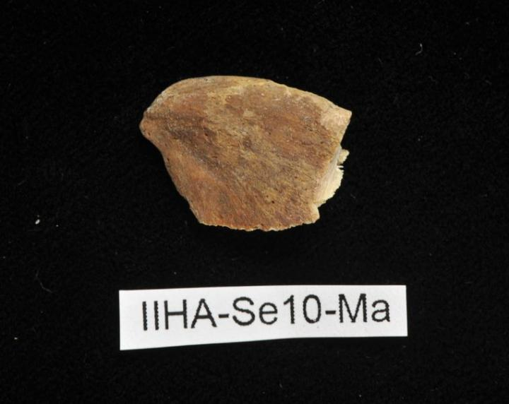Piece of Bone from Medieval Cemetery