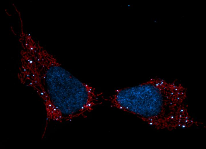 Salk Shadel Nature Met Sci Image