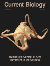 Octopus Arms/Cover Image