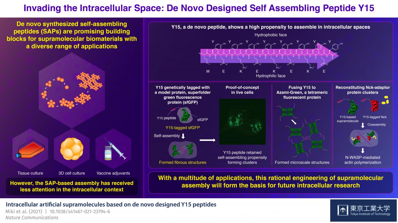 Figure 1 Invading the Intracellular Space: De Novo Designed Self Assembling Peptide Y15