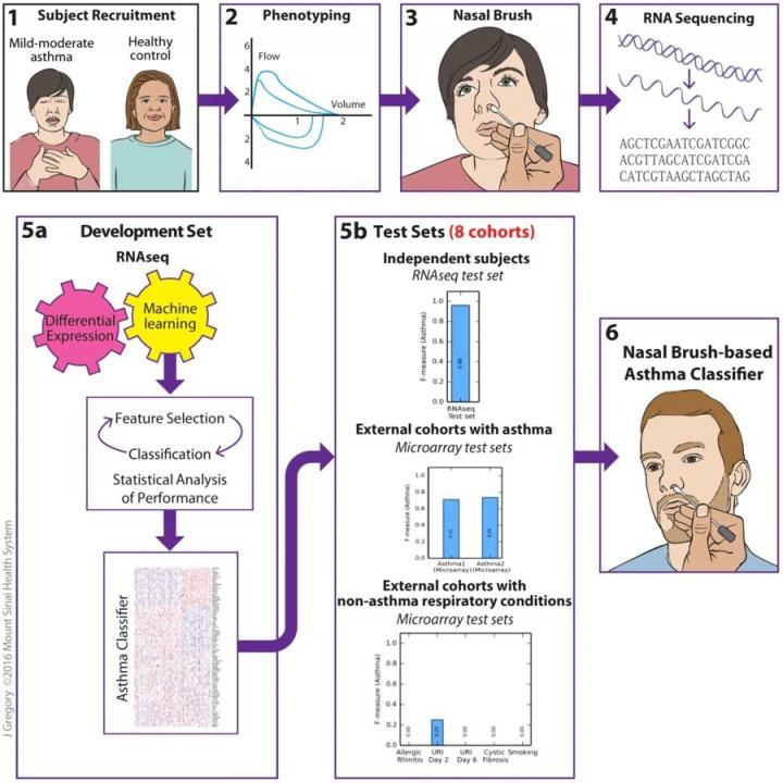 Study Flow for the Identification of a Nasal Brush-Based Classifier of Asthma By Machine Learning