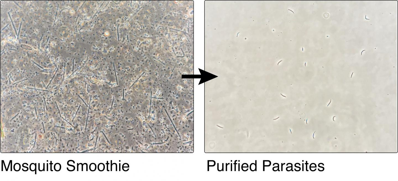 Purification Method