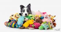 Max among toys