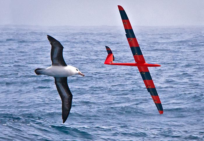 Albatross and UAV