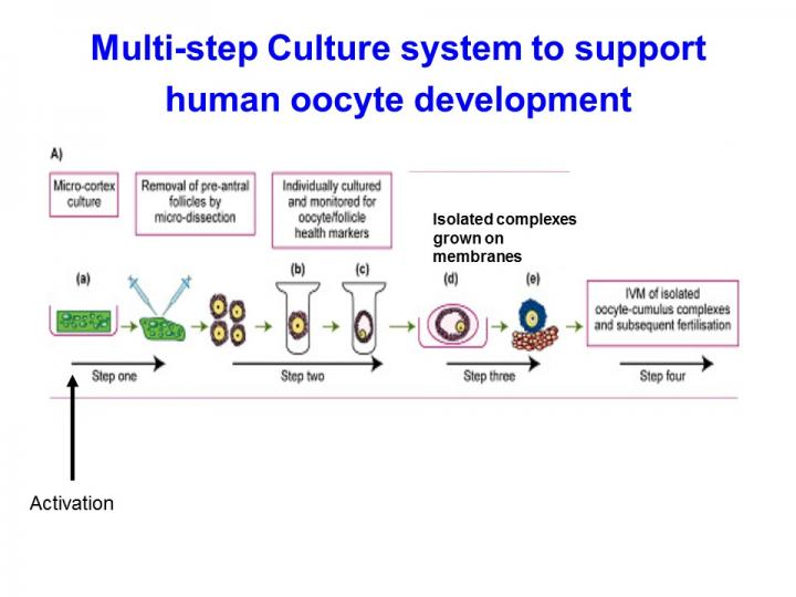 Schematic Image of Human Egg Development in Laboratory