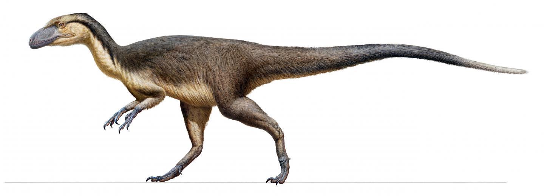 Australian Feathered Polar Dinosaur