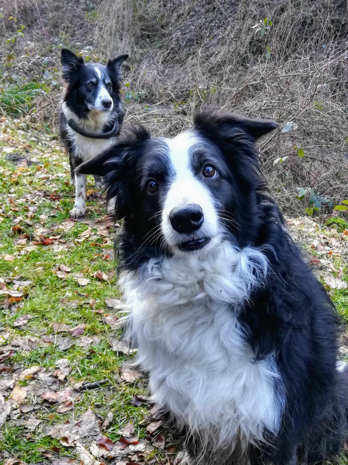 Research: From puppyhood to senior age