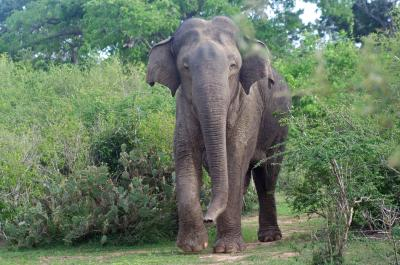 The Absence of Elephants and Rhinoceroses Reduces Biodiversity in Tropical Forests (1 of 2)