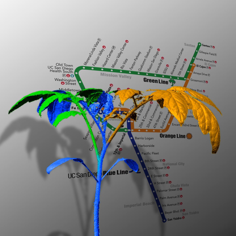 Navlakha Plant Networks
