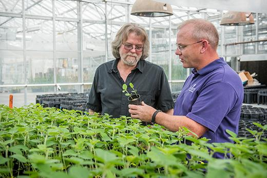 Researchers Earn Patent for Soybean Variety that May Save Industry Millions of Dollars a Year