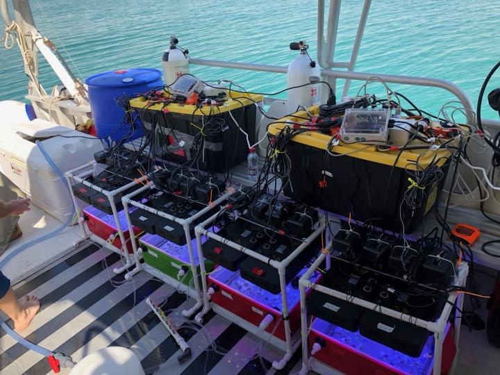 Test Boxes to Assess Coral Thermotolerance