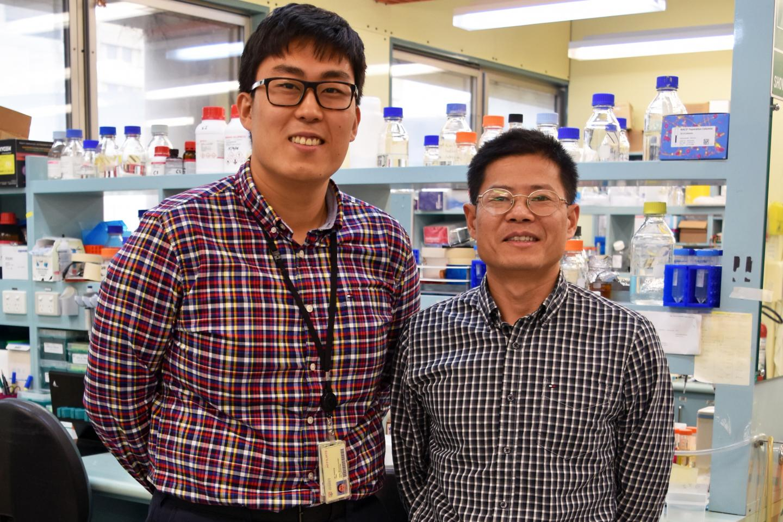 Dr. Jaesung Peter Choi and Dr. Xiangjian Zheng, Centenary Institute