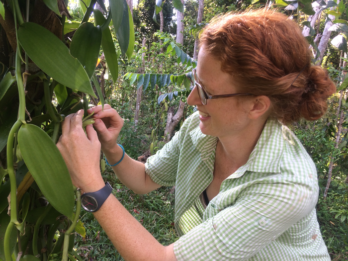 Annemarie Wurz hand-pollinates a vanilla flower in Madagascar.