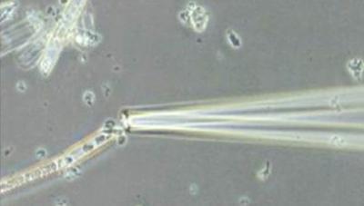 Glass Capillary