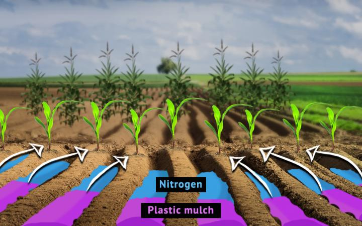 RUDN Pedologists Studied the Combined Effect of Nitrogen-Containing Fertilizers and Plastic Mulching