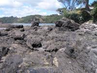Lower Miocene Tsunami Boulderite