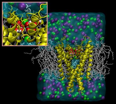 Potassium Channel Blocked by Water (1 of 2)