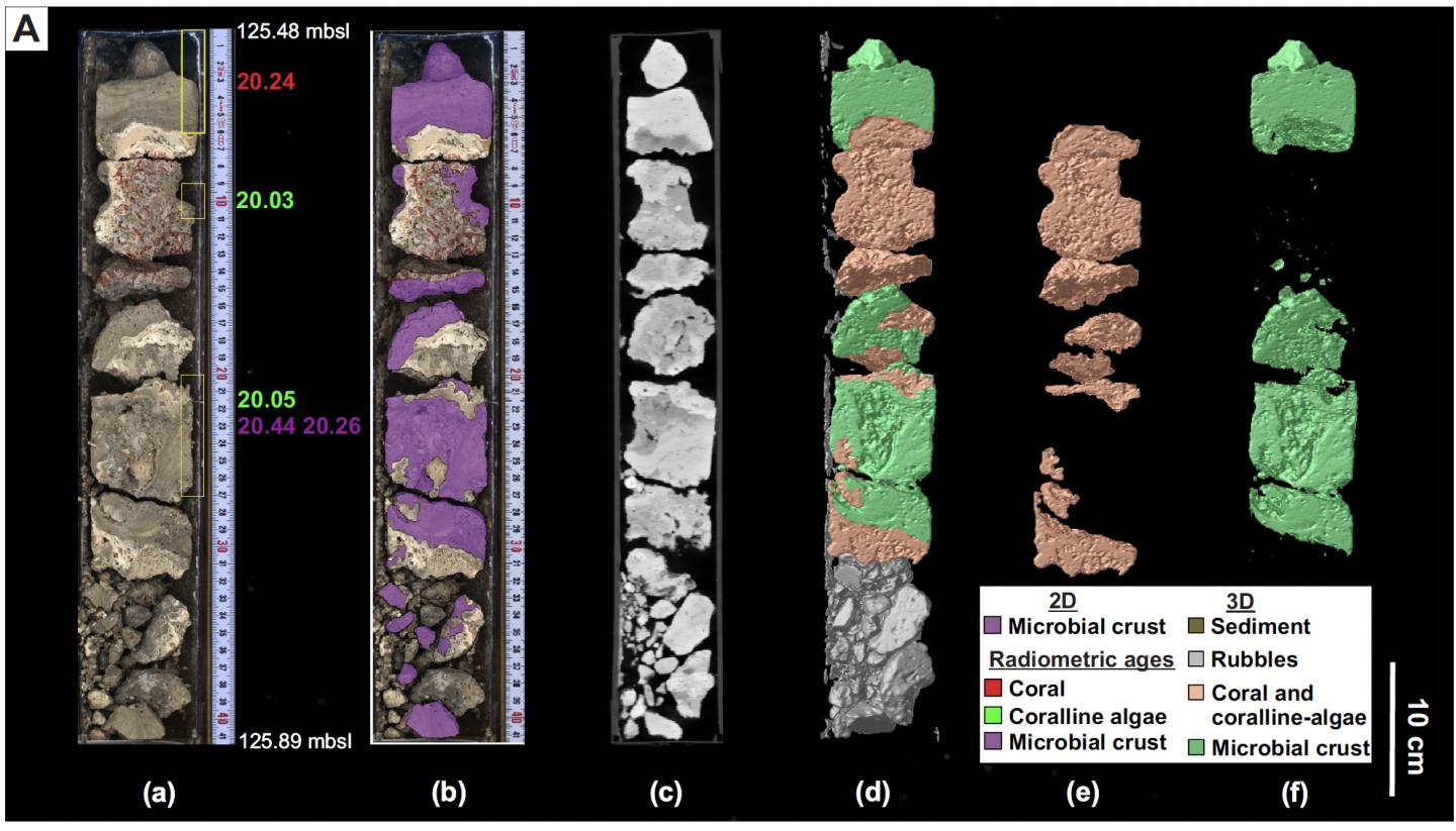 Core samples from the Great Barrier Reef