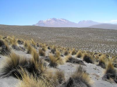 Dryland Site in Peru