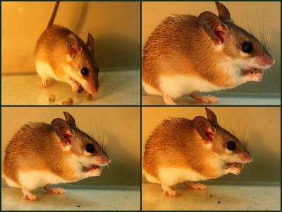Spitting Mouse Sequence