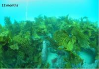 Artificial Reefs at 12 Months