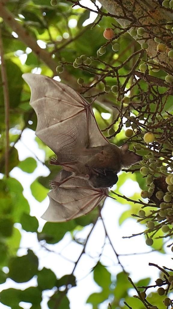 Images of bats.