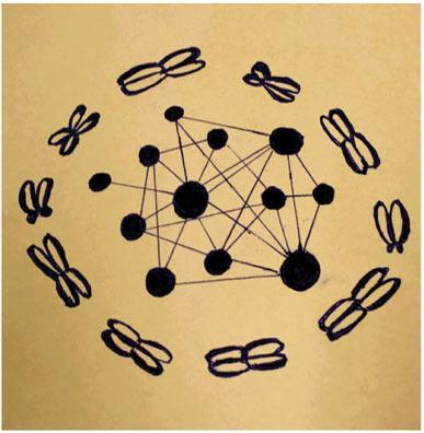 A Systems Biology Perspective on Molecular Cytogenetics