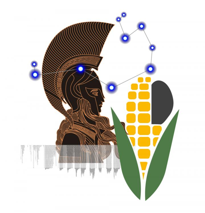 The Pleiades and maize immunity