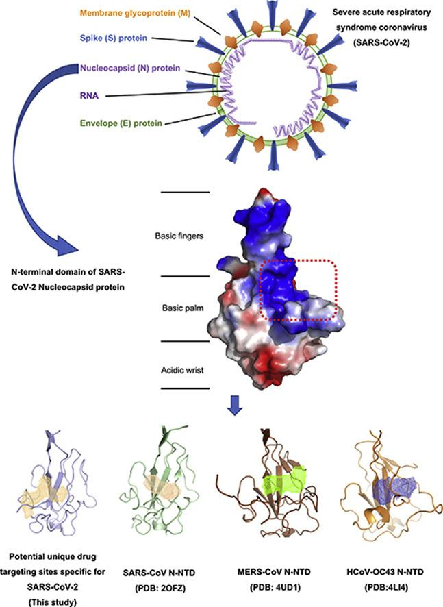 The crystal structure of the N-terminal RNA-binding domain of SARS-CoV-2 nucleocapsid protein