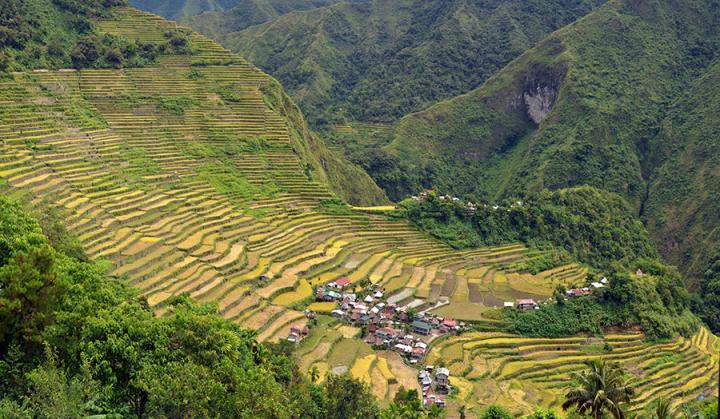 Rice Philippines Terraces