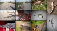 Roadkills on the BR-262 Highway