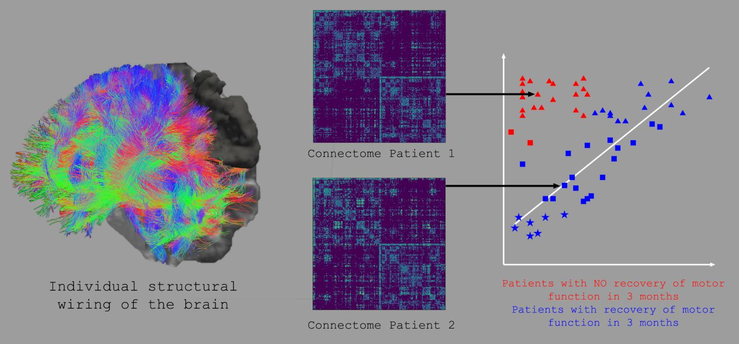 MRI-based techniques are used to determine the individual structural wiring of the brain and the underlying connectome
