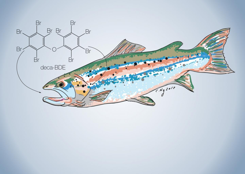 PBDEs in Salmon