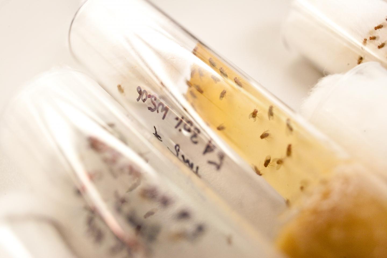 Fruit Flies (<I>Drosophila</I>) Munch on Coconut Oil