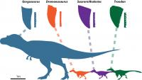Dinosaurs and Their Teeth