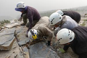 ROM fieldwork crew extracting a fossil slab