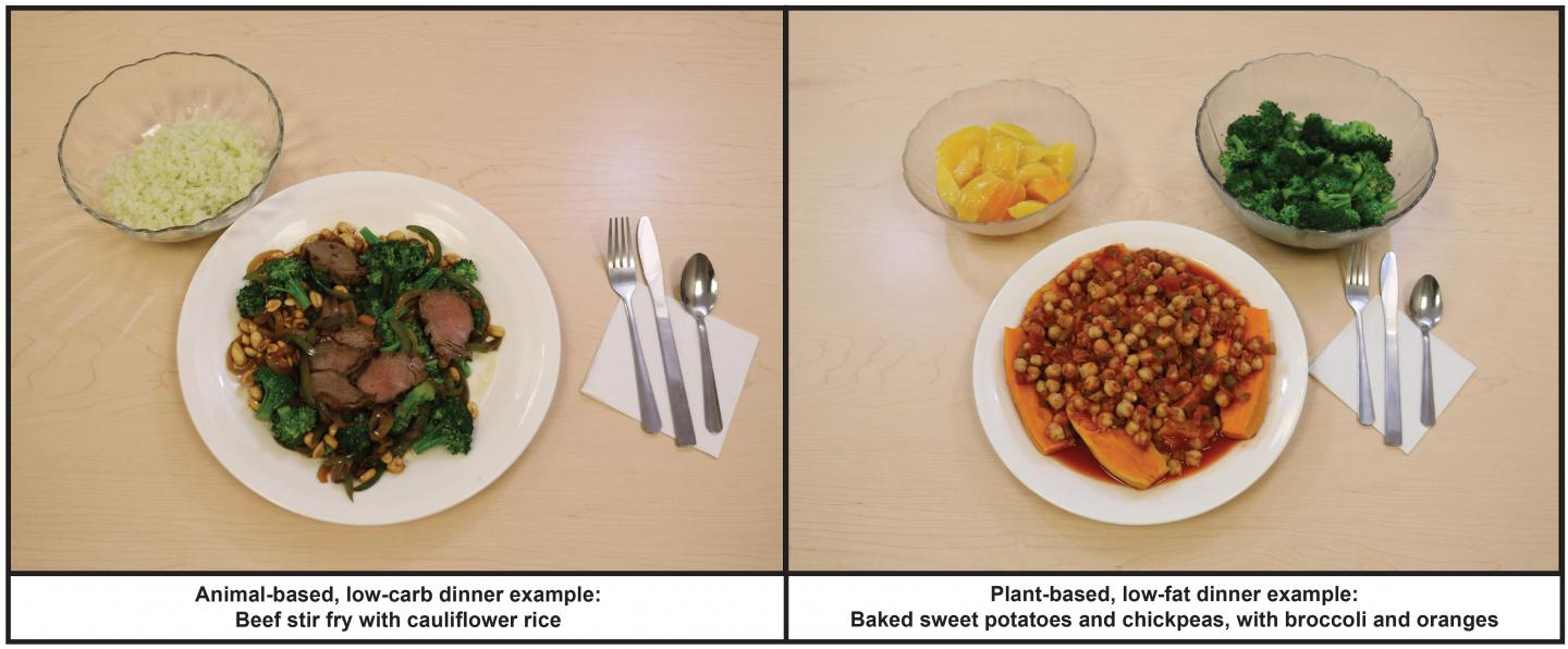 Lowcarb Vs Lowfat Dinner (Examples of Dinners from Each Diet)
